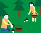 Osoby zbierają grzyby w lesie.