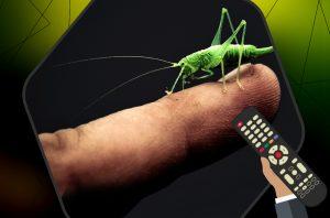 Palec z pasikonikiem (zielony owad), z prawej strony pilot do telewizora