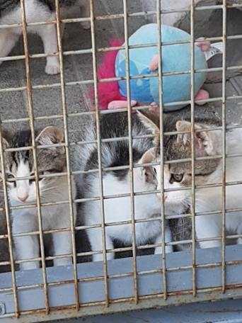 Na zdjęciu widać trzy koty za kratami.