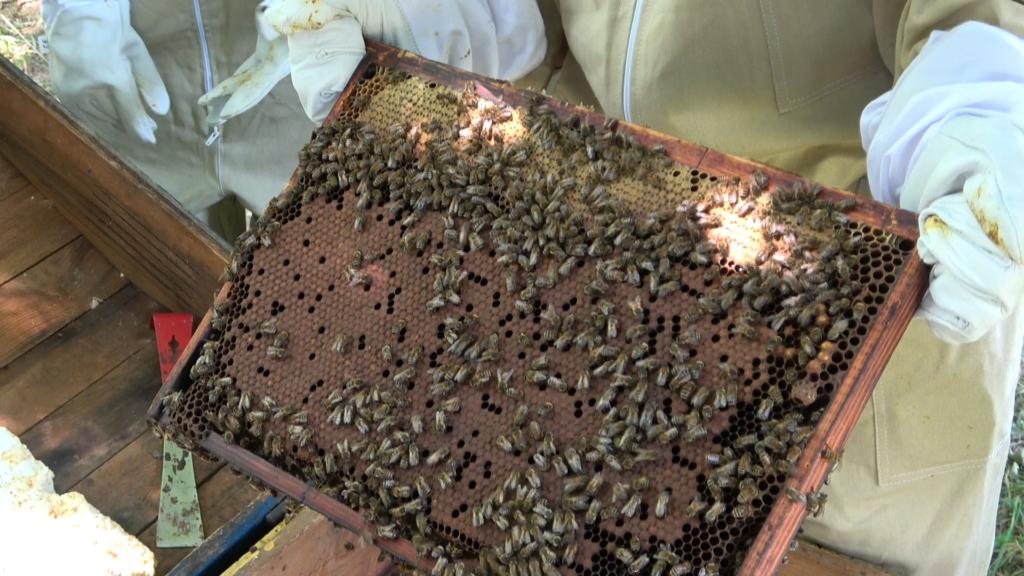 Pszczoły pracujące nad miodem.