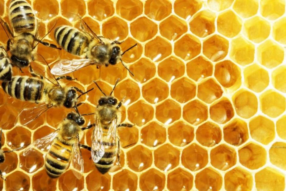 Paweł Zawada, wicestarosta powiatu otwockiego o swojej pasji – pszczelarstwie